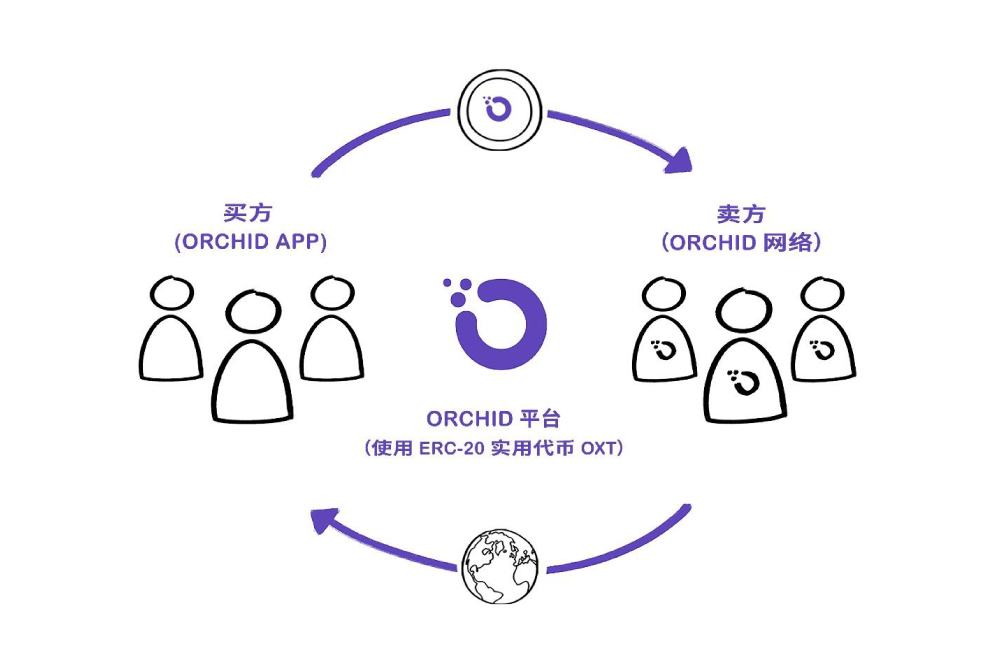 Illustration of the lifecycle of OXT